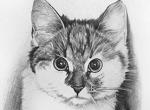 Katze_001