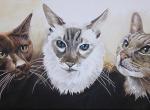 Katzen Portrait Malerei