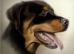 Hundeporträt.jpg