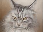 Katzenportrait.jpg
